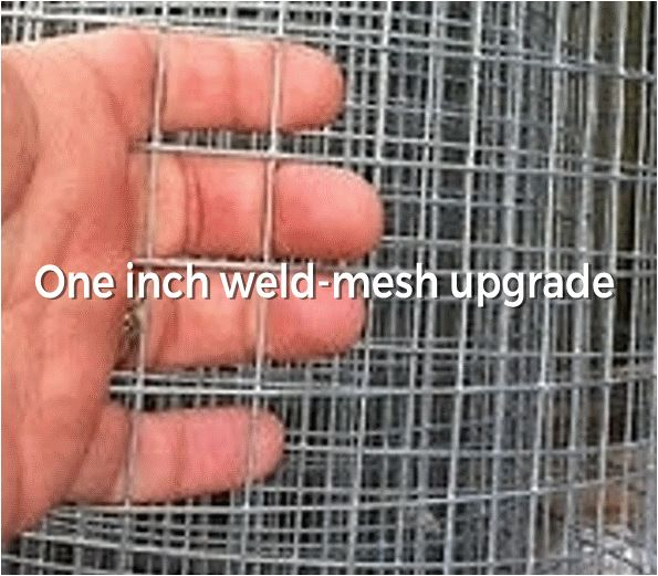 one inch mesh upgrade 100x100